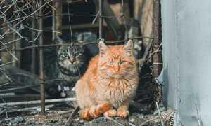 gatti di colonia